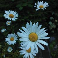 pihan kasvit puutarhuri pihan hoitotyöt